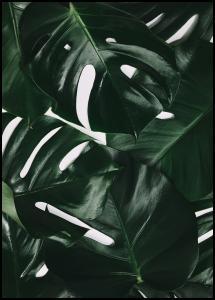 Bildverkstad Monstera Plant I Poster