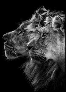 Bildverkstad Lion and lioness portrait
