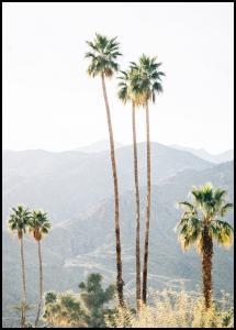 Bildverkstad Palm Trees I Poster
