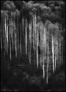 Bildverkstad Forest Art