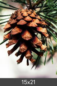 Egen tillverkning -Kundbild Vergrößerung FineArt Bamboo 290 g