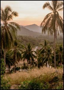 Bildverkstad Palm Trees On Mountain Poster