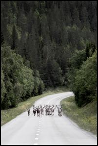 Bildverkstad Reindeer road