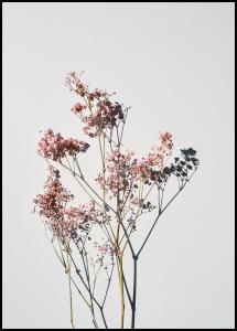 Bildverkstad Dried flowers I Poster