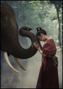 Lagervaror egen produktion Respect the elephant