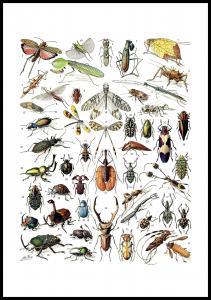 Lagervaror egen produktion Schule Insekten II