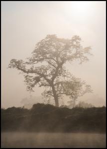 Bildverkstad Misty Tree