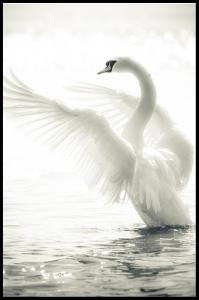 Lagervaror egen produktion Swan