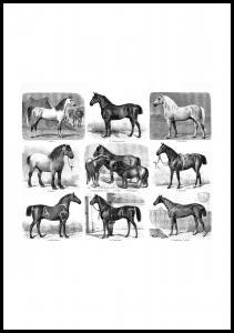 Lagervaror egen produktion Pferderassen