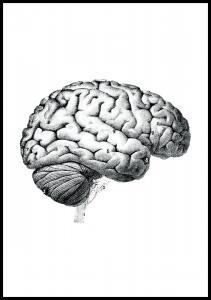 Lagervaror egen produktion Schule Gehirn