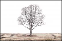 Bildverkstad The lonely tree