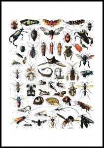 Lagervaror egen produktion Schule Insekten I