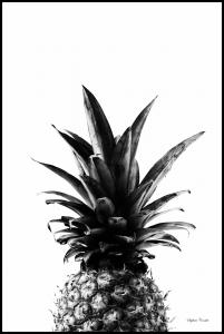 Bildverkstad Pineapple B&W
