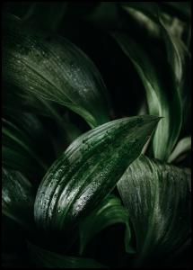 Bildverkstad Plant Poster